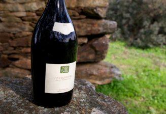 A prestigious Corsican wine: Clos Teddi